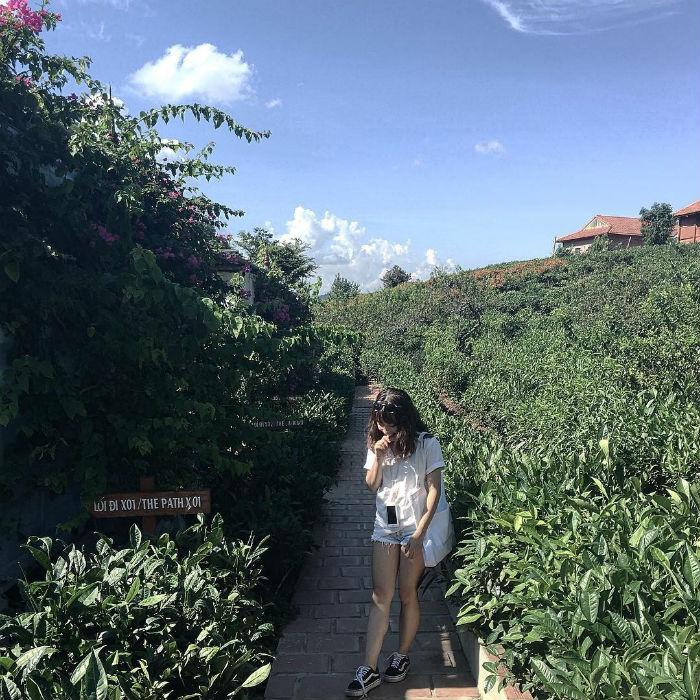 Đi giữa vườn trà