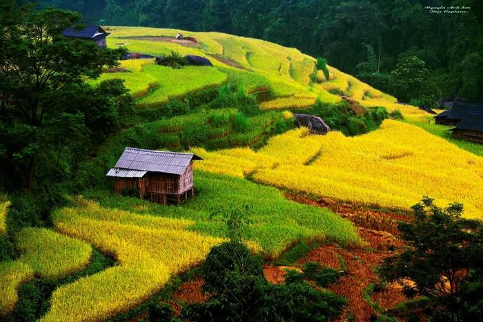 Nơi ta bắt gặp những thửa ruộng vàng óng ả xen lẫn với những thửa ruộng xám ngắt vừa mới gặp