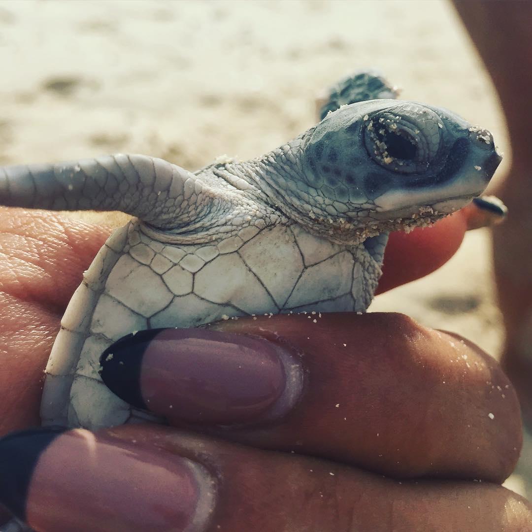 Rùa biển – những tạo vật tuyệt đẹp mà mẹ thiên nhiên dành tặng cho Côn Đảo - Ảnh: IG pearlvb