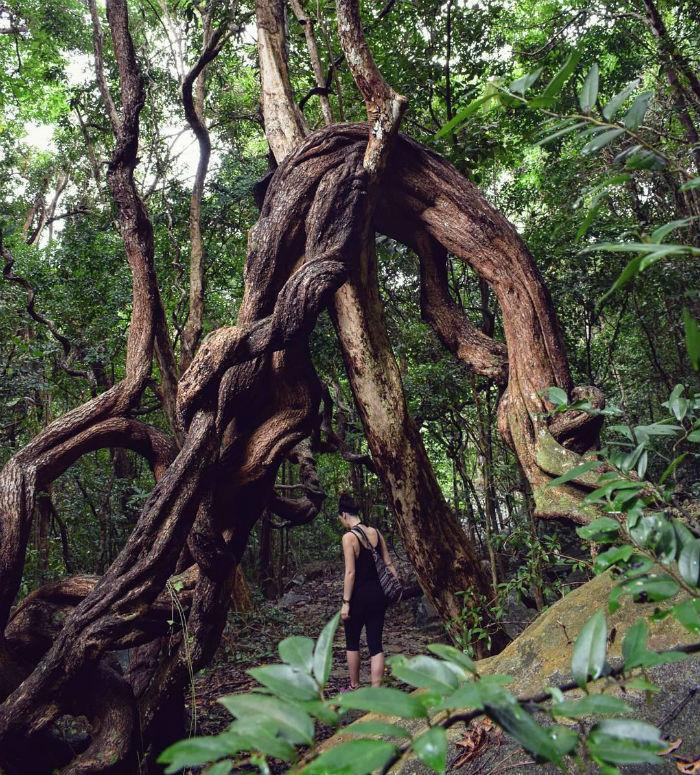 Lạc giữa rừng rậm - Ảnh minh họa: khortii