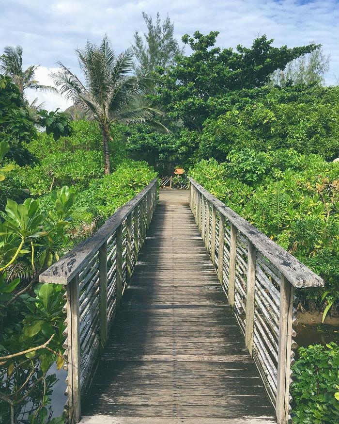 Vườn địa đàng giữa lòng Côn Đảo - Ảnh minh họa: IG chloebnguyen