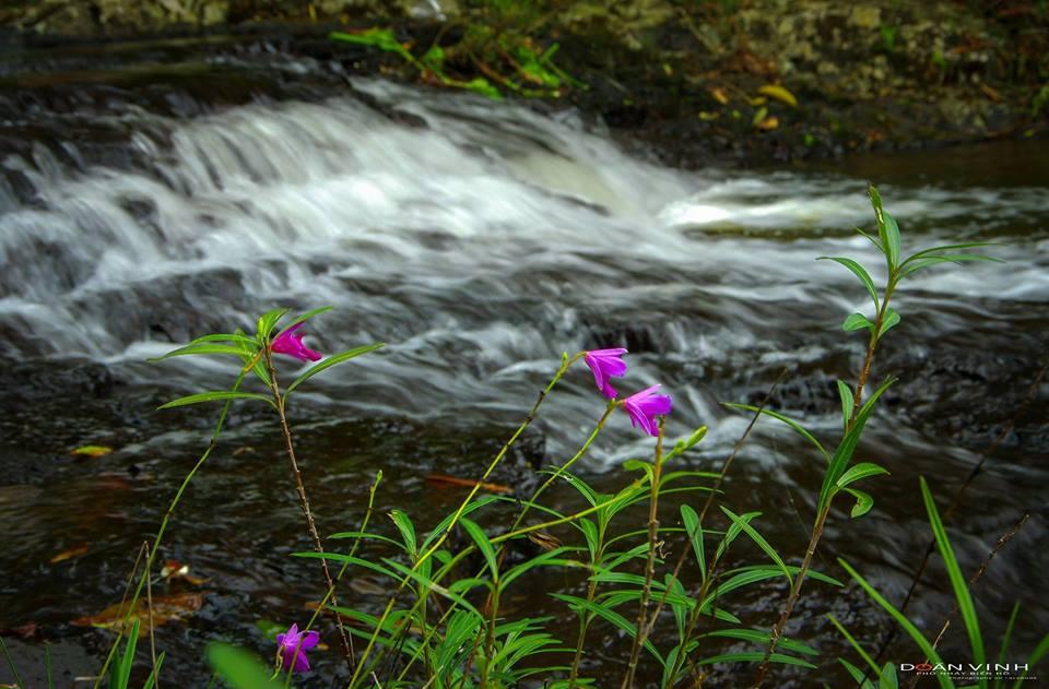 Dòng nước trong veo chảy qua những tảng đá - Ảnh: Doãn Vinh