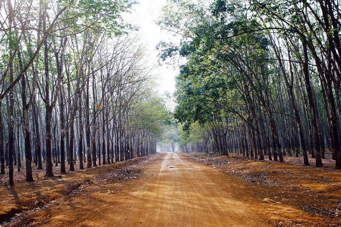 Những hàng cây đã bắt đầu trổ lá xanh rì