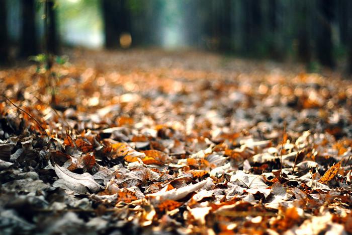Đâu đó vẫn còn sót lại thảm lá vàng của những ngày mùa lá rụng