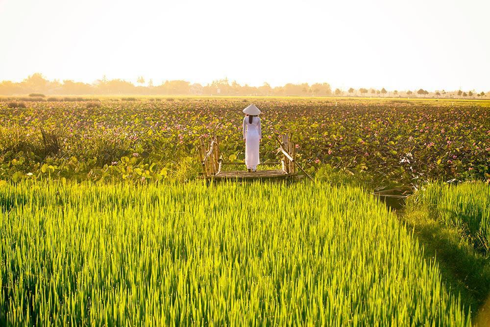 Cũng theo trang này, vẻ đẹp của những phụ nữ Việt trong tà áo dài truyền thống đã để lại ấn tượng sâu đậm trong lòng du khách đến Việt Nam.