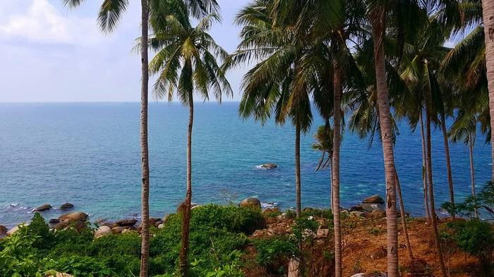 Hàng dừa xanh xanh