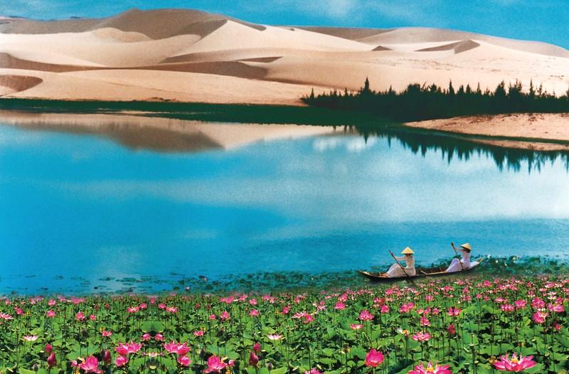 Hay ghé Bàu Sen ngắm những đóa sen hồng nở rộ bên sa mạc trắng tinh khôi