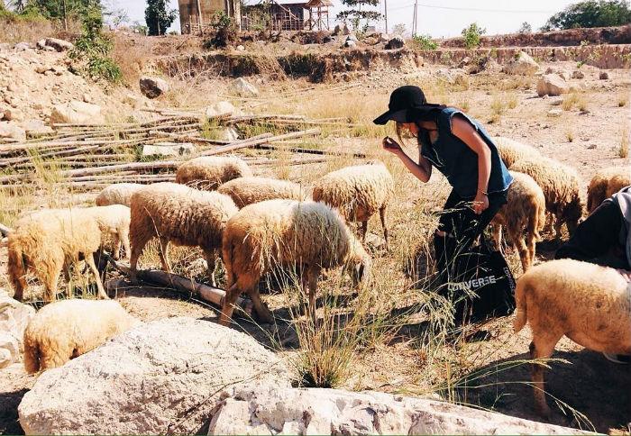 Đàn cừu xinh xắn ở Hồ Đá Xanh