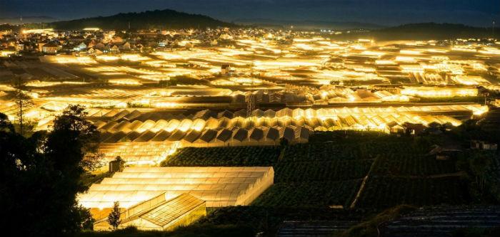 Cả trang trại hoa bừng sáng giữa bầu trời đêm - Ảnh: sưu tầm