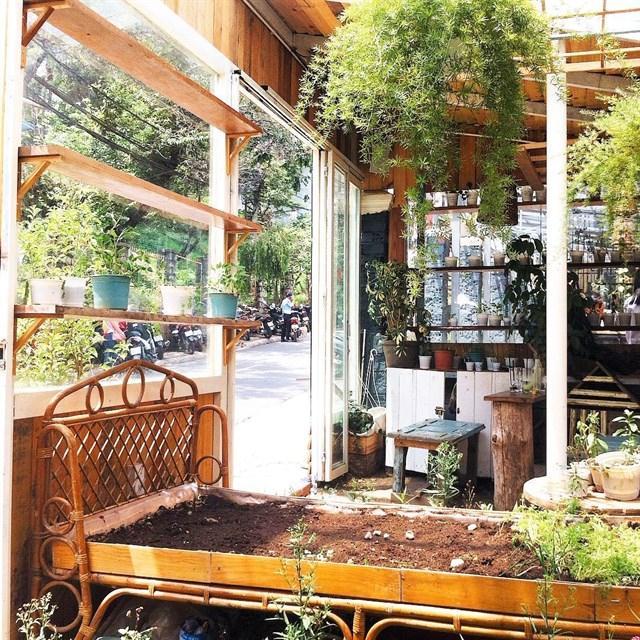Đâu đâu cũng thấy những luống rau xinh xắn, từ ngoài ngõ cho đến bàn cafe bên trong - Ảnh: sưu tầm
