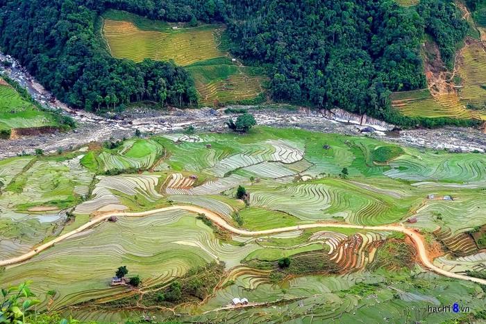 Con đường đất nhỏ chạy xuyên giữa đồng lúa bát ngát.