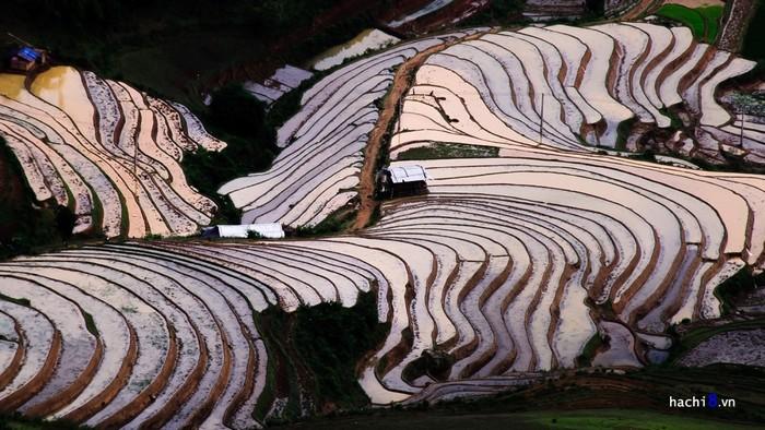 Lúa Tây Bắc chỉ được trồng một vụ vì dựa vào lượng nước mưa tự nhiên. Những bậc thang lấp lánh nước trong nắng chiều tạo nên một vẻ đẹp khiến cho bao du khách phải ngỡ ngàng