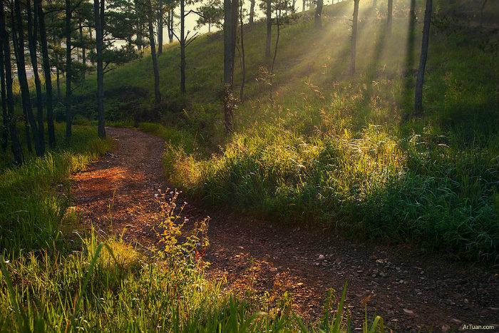 Con đường dẫn lối khám phá vườn quốc gia Bidoup Núi Bà