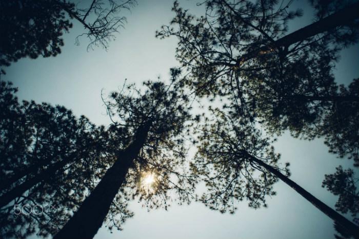 Những hàng cây cao vút, xanh rì có tuổi đời lâu năm