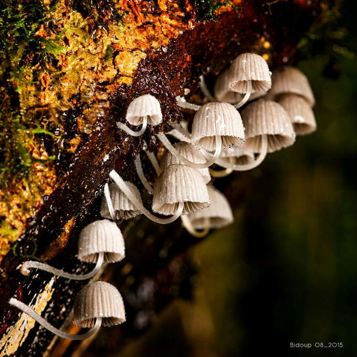 Họ nhà nấm độc đáo ở vườn quốc gia Bidoup
