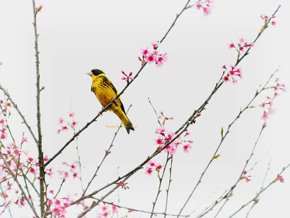 Khoảnh khắc mùa xuân ở vườn quốc gia Bidoup Núi Bà