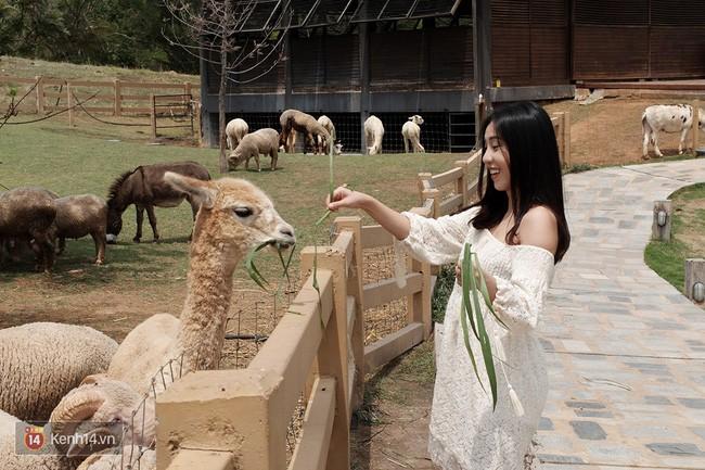 Bạn sẽ được tận tay cho những chú cừu, ngựa ở đây ăn cỏ đấy.