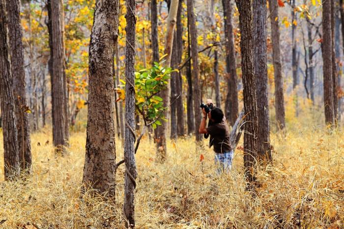 Lên Tây Nguyên để lạc bước trong những khu rừng nguyên sơ như thuở hồng hoang