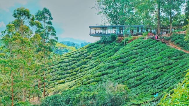 Quán trà bé xinh nằm trên đồi