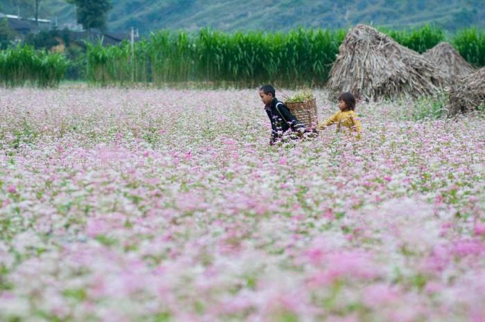 Đi qua những mùa thương nhớ Tây Bắc - Ảnh: Meogia Photography
