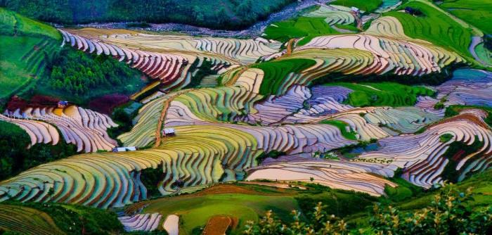 Bức tranh Tây Bắc mùa nước đổ - Ảnh: Meogia Photography