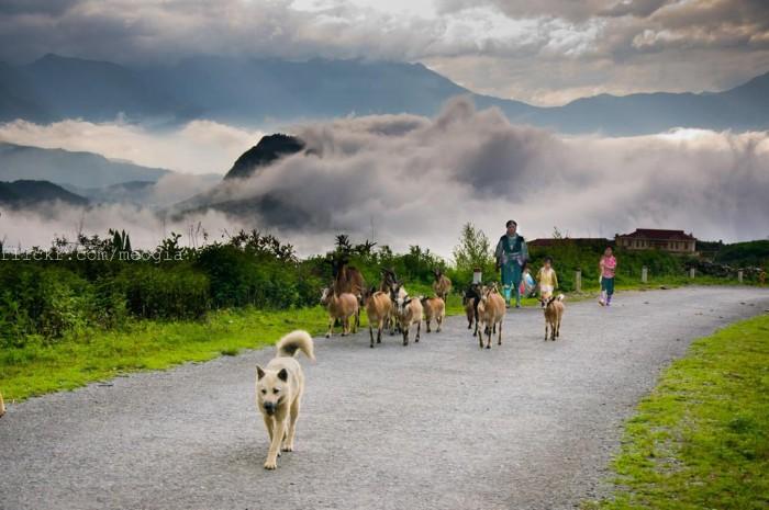 Chiều dần buông trên đỉnh đồi - Ảnh: Meogia Photography