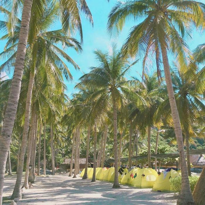 Bình Lập – những hàng dừa xanh rợp bóng