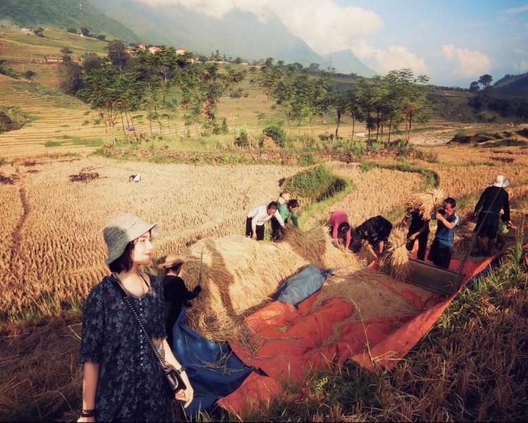 Hương lúa thơm lừng vừa được gặt xong