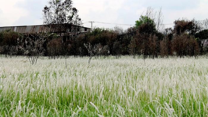 Hàng cây khô trông cô đơn nhưng lại rất cuốn hút - Ảnh: Xuân Lộc