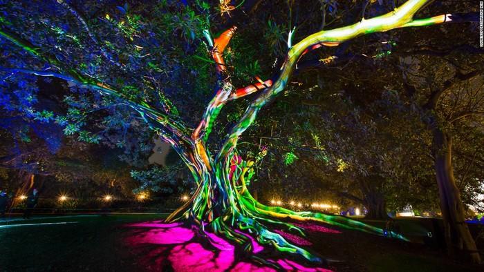 Thiên nhiên và công nghệ cùng hòa quyện trên cùng một cây lớn ở vịnh Moreton. Đây là một tác phẩm thuộc triển lãm Synthesis ở vườn bách thảo Royal.