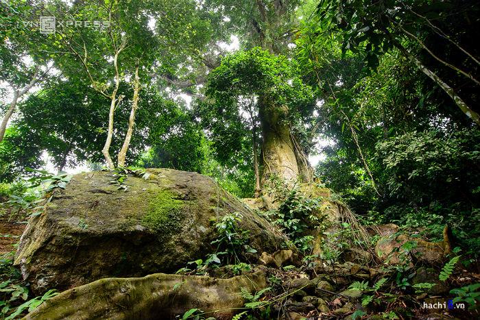 u vào phía thượng nguồn suối, bạn sẽ được chiêm ngưỡng cây sồi cổ thụ hơn 400 tuổi. Thân cây khá nhiều côn trùng như bọ nẹt, rết và cả những con vắt bé như sâu đo.
