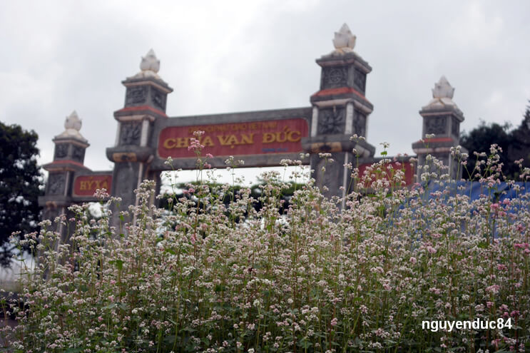 Vườn hoa tam giác mạch ở chùa Vạn Đức được nhiều người biết trong thời gian gần đây bởi loài hoa này vốn nổi tiếng với mảnh đất Hà Giang và thường nở rộ vào dịp tháng 10.