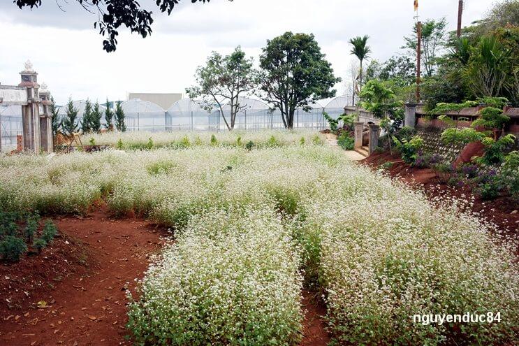 Hoa được trồng thành luống để du khách có thể tham quan, chụp ảnh dễ dàng mà không bị giẫm nát.