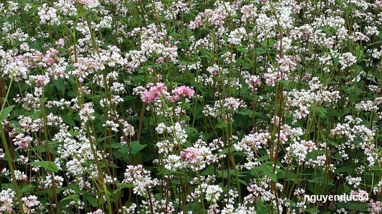 Đây là vườn hoa tham quan miễn phí. Khi vào, bạn hãy tôn trọng những người tạo nên vườn hoa này bằng cách giữ gìn không đạp lên thân hoa để nhiều người có cơ hội đến chiêm ngưỡng vẻ đẹp của nó.