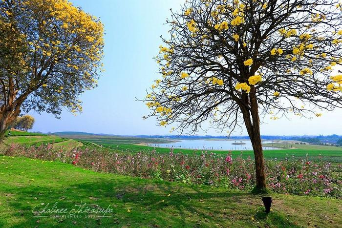 Những loài hoa giữa trời xanh Singha Park