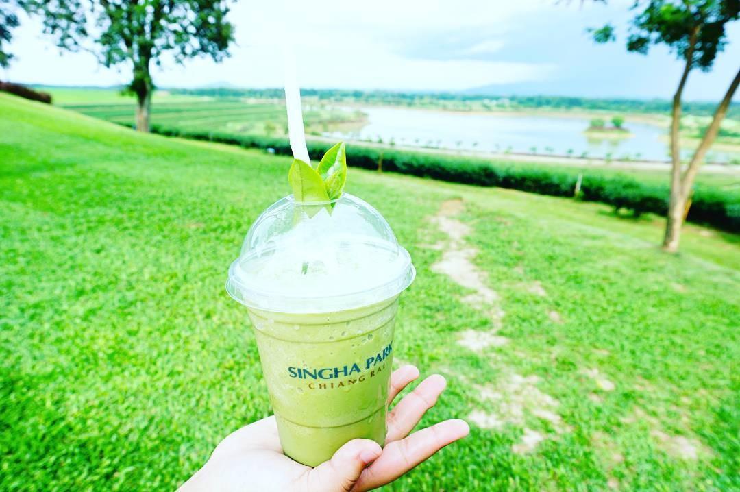 Thưởng thức trà xanh Chiangrai