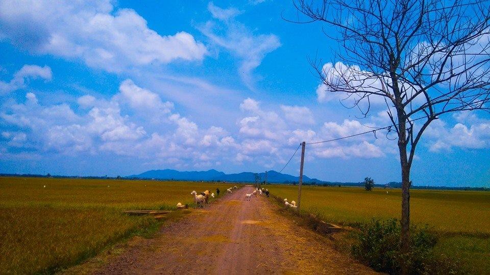 Con đường quê trải dài ngay trước mắt