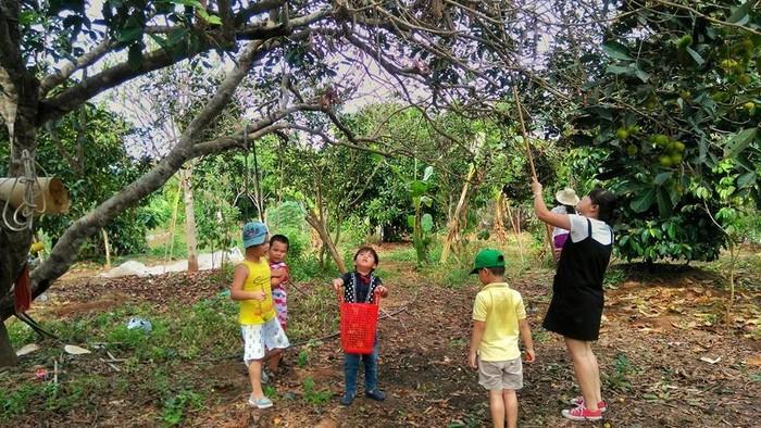 Các em hỏi học cách hái trái cây trong vườn