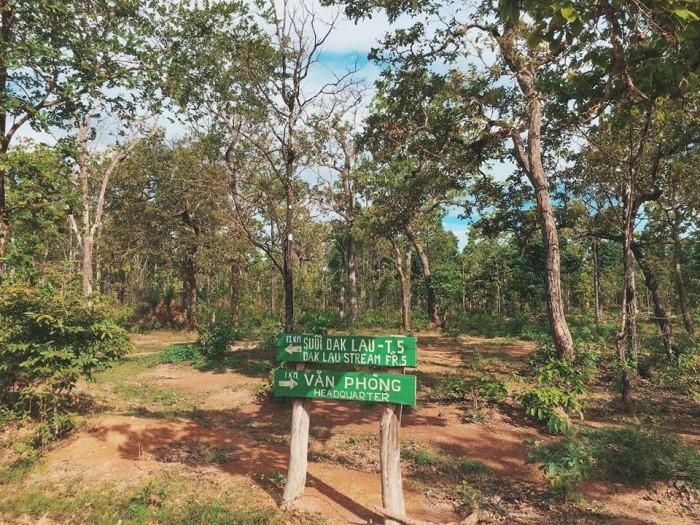 Những bảng hướng dẫn giữa rừng nên không lo bị lạc