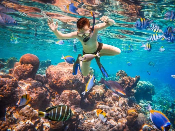 Lặn biển ngắm san hô là một hoạt động khám phá thú vị ở Hạ Long
