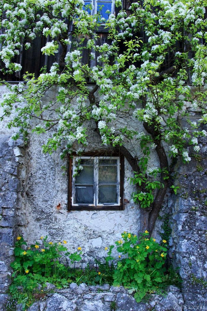 Hoa thơm cỏ lạ bên ô cửa