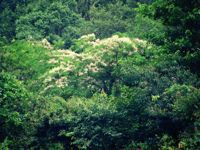 Quyện cùng cảnh sắc của màu hoa dại nở trắng một góc rừng - Ảnh: Leeboss2007