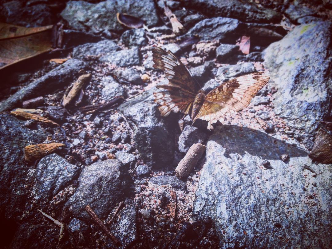 Bắt gặp chú bướm xinh lặng lẽ trên phiến đá - Ảnh: @r0cknqt