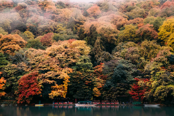 Những gam màu rực rỡ của sắc thu - Ảnh: Lê Nhâm Quý