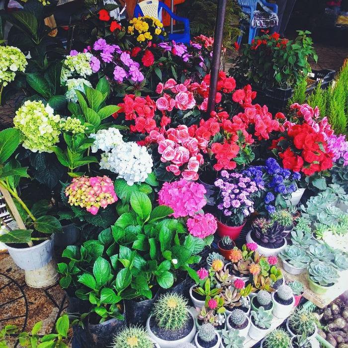 Thế giới ngàn hoa