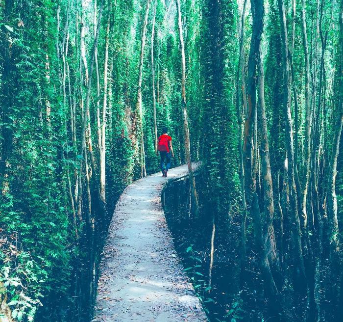 Xuyên qua con đường lãng mạn màu xanh