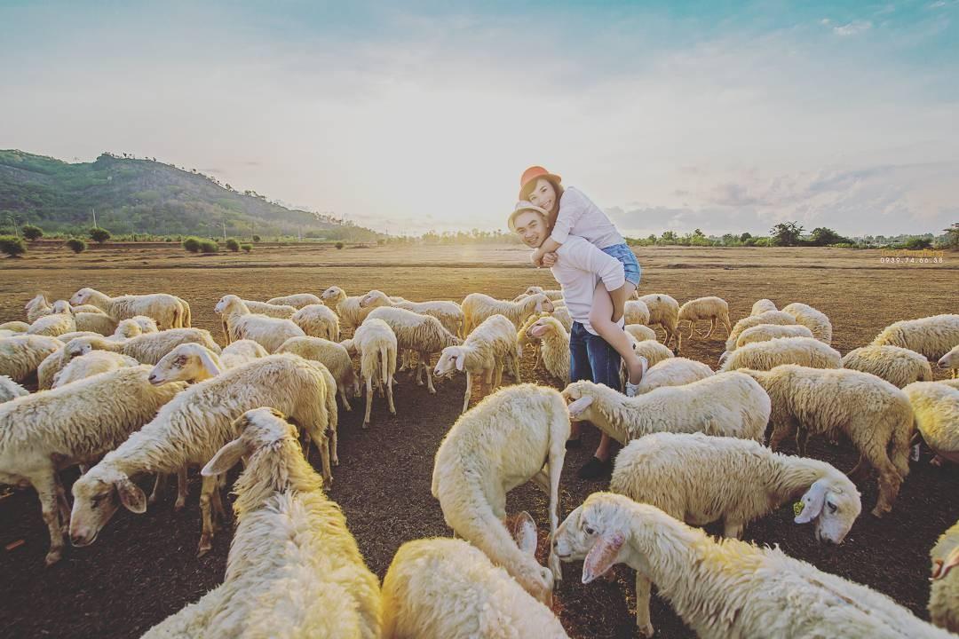 Vui cùng đàn cừu hiền lành