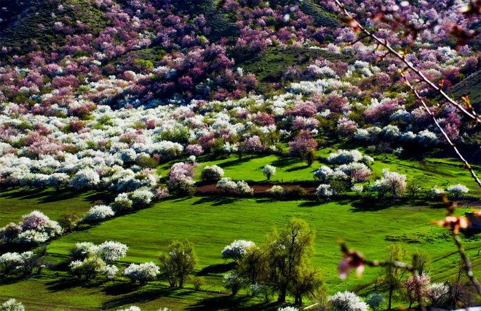 Đã bao giờ bạn được trông thấy một thung lũng đầy hoa tuyệt đẹp như vậy chưa