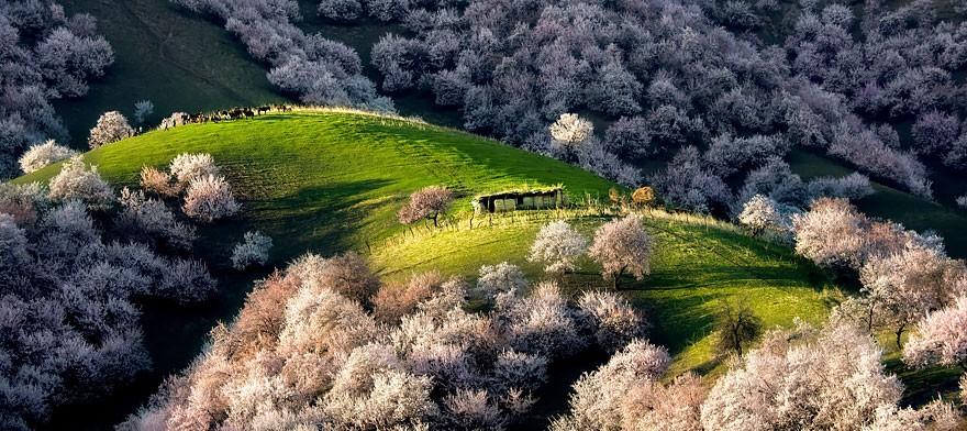 Những ngôi nhà nhỏ lấp ló giữa đồi hoa