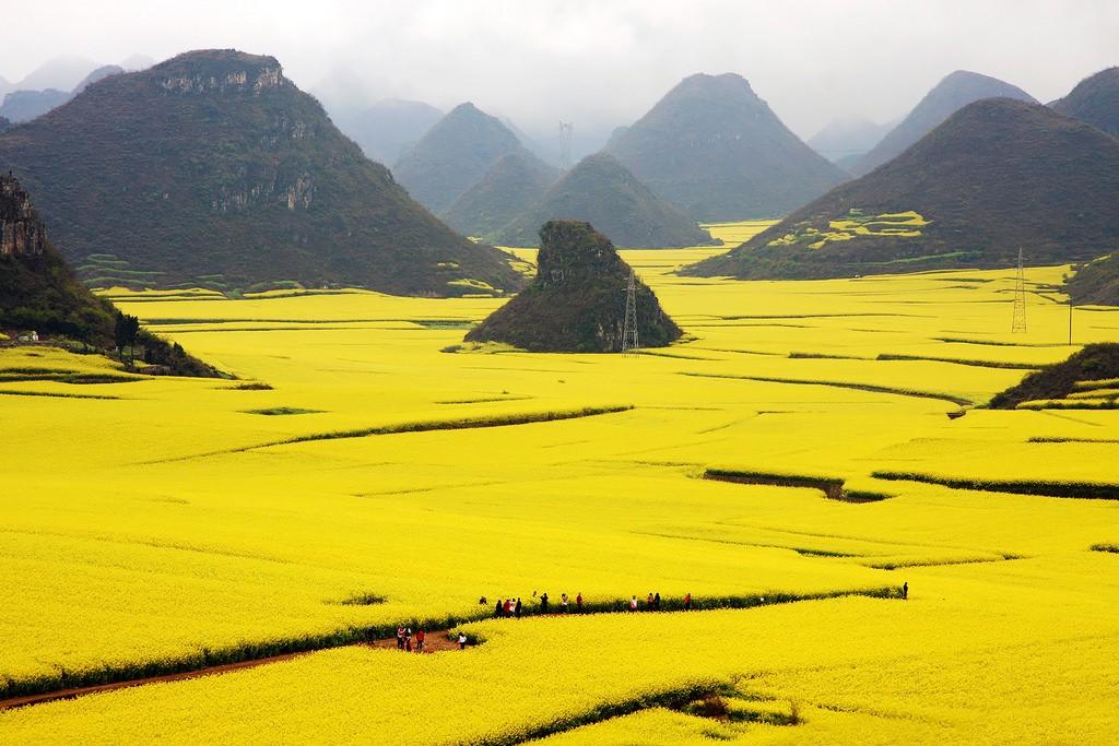Cánh đồng hoa cải dầu khổng lồ ở La Bình khi vào mùa
